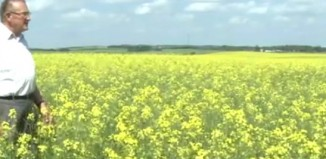 Disadvantages and Advantages of Genetically Modified Crops