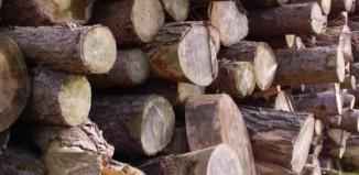 Biomass Energy Advantages and Disadvantages