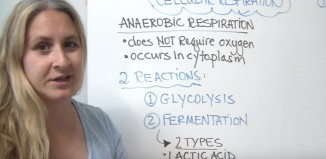 Difference Between Fermentation and Anaerobic Respiration